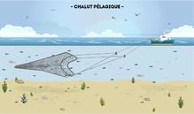 Les chalutiers pélagiques